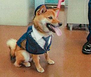 長崎県松浦署で豆柴の「広報犬」が誕生