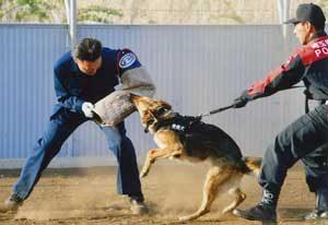 埼玉県警が直轄警察犬・警備犬の運用を開始