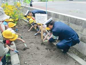 北海道留萌署が園児と一緒にひまわりの種植える