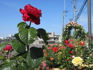 愛媛県西条西署の花壇が住民の憩いの場に