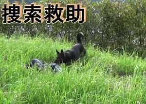 鹿児島県警で警察犬の教養DVD「鼻の捜査官」を作成