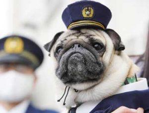 岡山県赤磐署が「田中太郎君」を防犯・事故防止の対策犬に委嘱