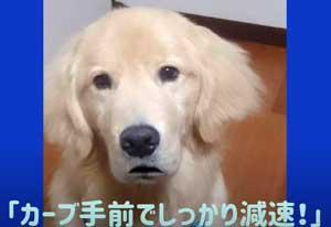 福井県警で飼い犬が交通安全呼び掛ける動画「ワンワンお悩み相談室」制作
